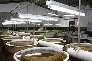 Laboratório de reprodução de peixes