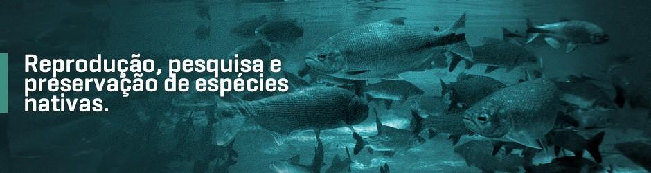 image (4).fw