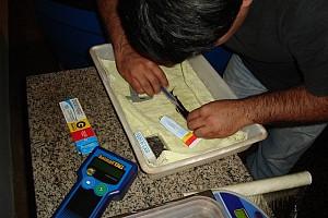Matrizes marcadas com microchip para controle dos lotes de alevinos (rastreabilidade)