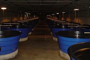 Estrutura para condicionamento alimentar de peixes carnívoros
