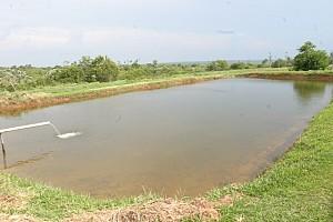 Tanque escavado para produção de espécies onívoras